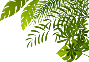 jungle background-top-right